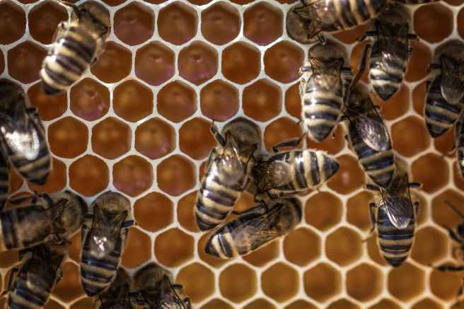 animals apiary beehive beekeeping